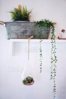 多肉植物の写真・画像素材[2011107]