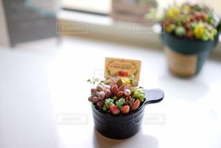 多肉植物の写真・画像素材[2011110]