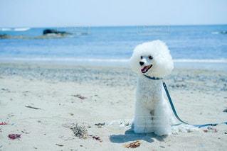 砂浜の上に座っている犬の写真・画像素材[2114594]