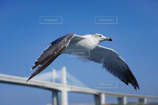 空を飛ぶカモメと小名浜マリンブリッジの写真・画像素材[2419393]