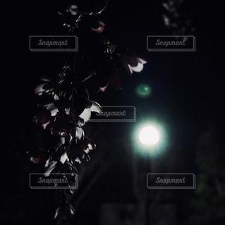 夜桜の写真・画像素材[1800724]