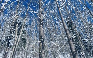 雪に覆われた木の写真・画像素材[1802902]