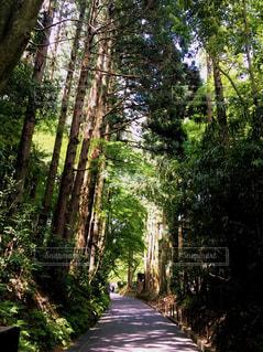 林道の写真・画像素材[1829082]