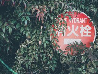 消火栓の標識の写真・画像素材[1847936]