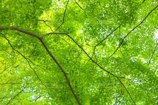 公園の木の葉っぱがの写真・画像素材[1806076]