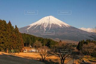 まかいの牧場の夕方の富士山の写真・画像素材[1839248]