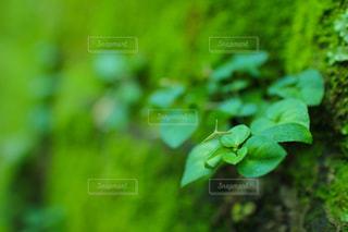 緑色の雑草と葉の写真・画像素材[1858736]