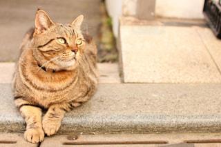 江ノ島の夕暮れの猫の写真・画像素材[1858737]