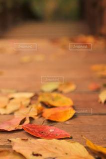 落ち葉の写真・画像素材[1871445]