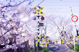 踏み切りと桜の写真・画像素材[1998274]