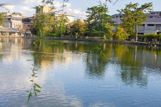 奈良の猿沢池の写真・画像素材[2021103]
