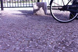 地面に散った桜の花びらと自転車の写真・画像素材[2059424]