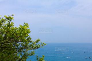 海と木の写真・画像素材[2094936]