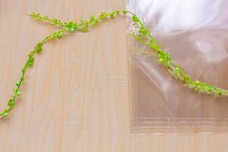 透明な袋の写真・画像素材[2142782]
