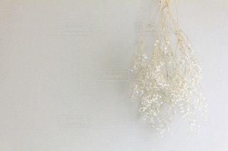 白いかすみ草の写真・画像素材[2277437]