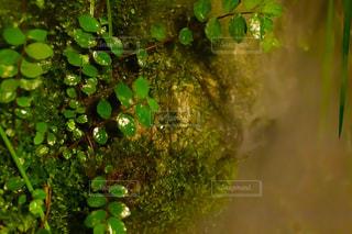 葉っぱと湿地の写真・画像素材[2328780]