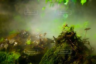 葉っぱと湿地の写真・画像素材[2328785]