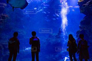 水族館と人のシルエットの写真・画像素材[2328805]