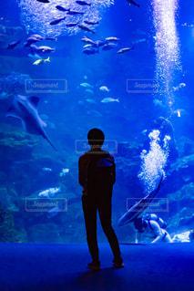 水族館と人のシルエットの写真・画像素材[2328806]
