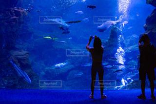 水族館と人のシルエットの写真・画像素材[2328825]