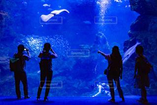 水族館と人のシルエットの写真・画像素材[2328832]