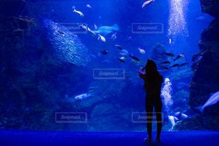 水族館と人のシルエットの写真・画像素材[2328834]