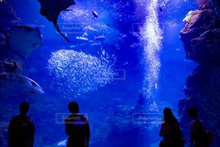 水族館と人のシルエットの写真・画像素材[2328861]