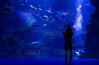 水族館と人のシルエットの写真・画像素材[2328864]