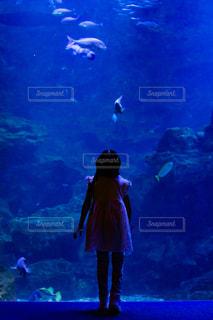 水族館と子どもの写真・画像素材[2328880]