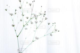 かすみ草のアップの写真・画像素材[2953344]