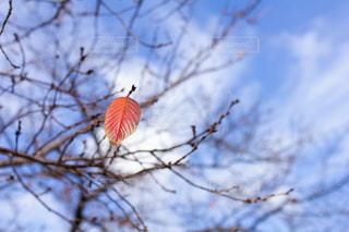 枯れ木と葉っぱの写真・画像素材[2953429]