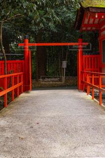 寺社の鳥居と森林の写真・画像素材[2953458]