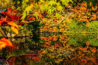 京都府永観堂の池と紅葉の写真・画像素材[2953472]