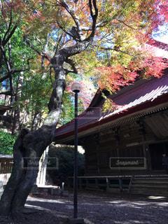 紅葉しているカエデと寺の写真・画像素材[1809619]