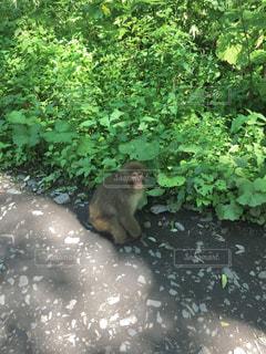 登山道に座っている猿の写真・画像素材[2364052]