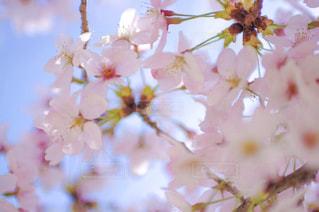 近くの花のアップの写真・画像素材[1803745]
