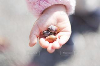 子供の手にどんぐりの写真・画像素材[1803975]
