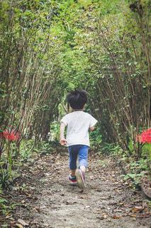木のトンネルへ走っていく子供の写真・画像素材[1803976]