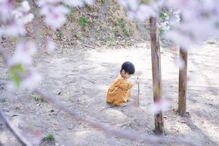 桜の下で遊ぶ女の子の写真・画像素材[2086046]