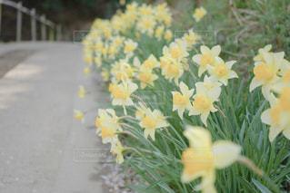 坂道と花の写真・画像素材[2086048]