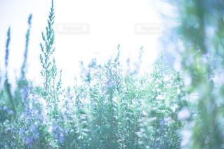 ふんわり 優しい 春の写真・画像素材[3062005]
