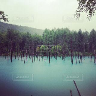 青い池の写真・画像素材[1804171]
