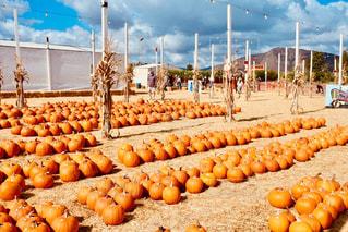 かぼちゃがいっぱいの写真・画像素材[1804443]