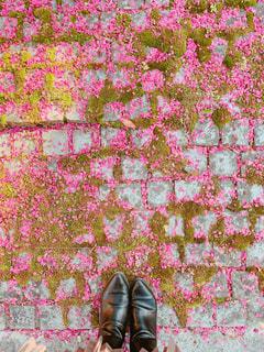 散ってもなおかわいい梅の花。の写真・画像素材[2070469]