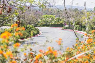 綺麗な花の咲く丘の坂道の写真・画像素材[2206475]