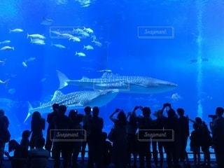 沖縄美ら海水族館の写真・画像素材[1842531]