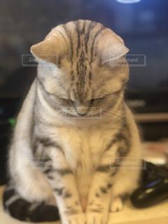 猫のクローズアップの写真・画像素材[2312295]