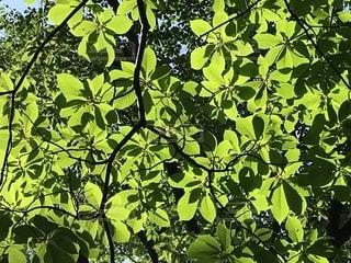 木のクローズアップの写真・画像素材[2208619]