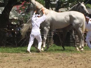 相馬野馬追 野馬懸の写真・画像素材[1806895]