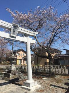 貴船神社の鳥居と桜の写真・画像素材[1808360]